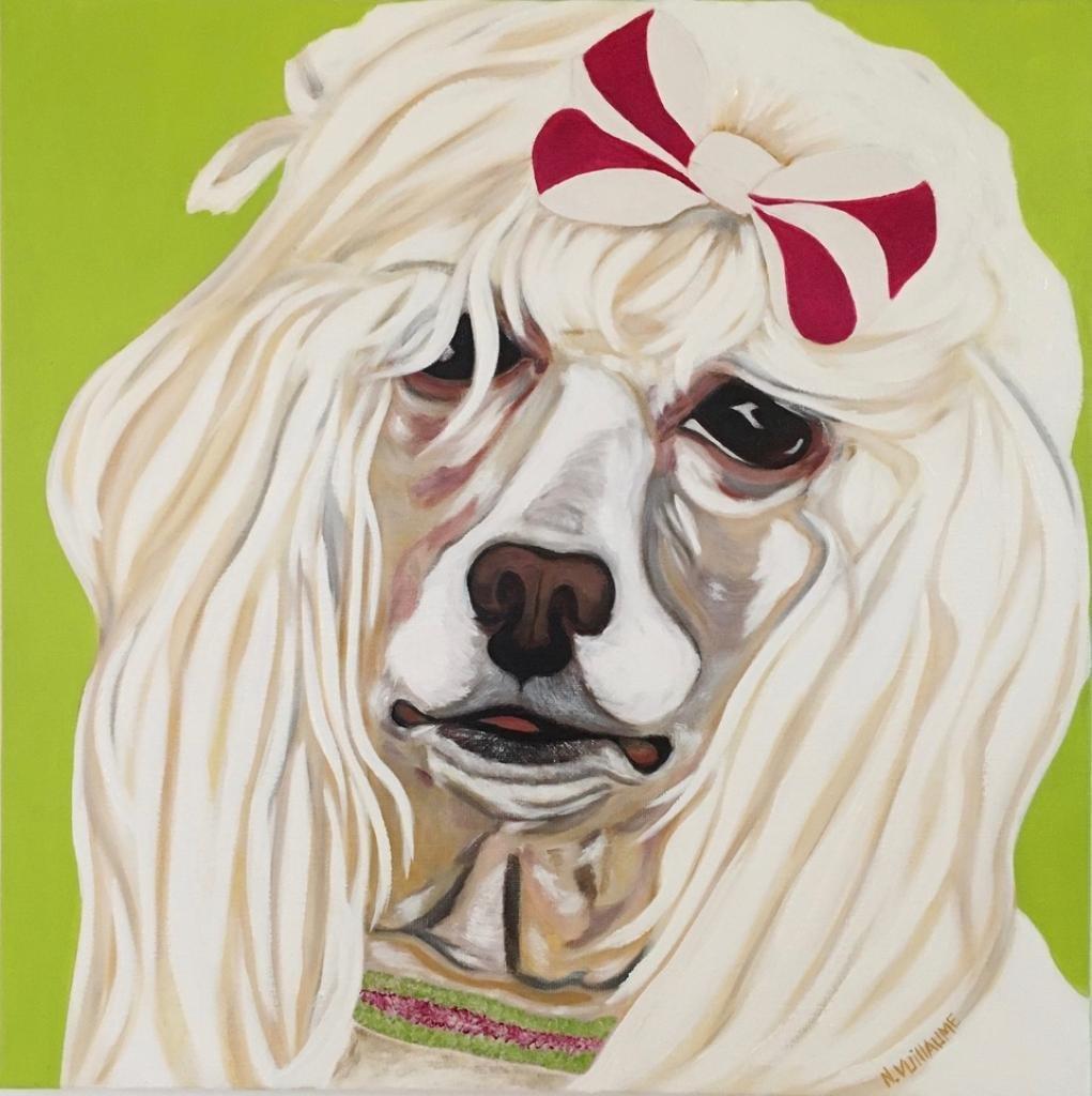 Portrait animalier, d'une femelle caniche, au collier de strass, avec nœud rose et blanc.