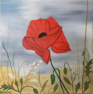 Bodegón, de amapola, visto en la madrugada, en primavera, en un prado soleado.