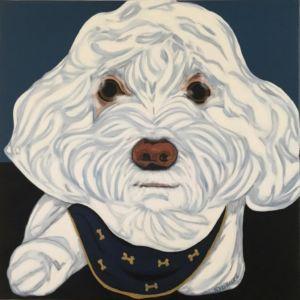 Portrait de chien, mâle, de race caniche, blanc et frisé.